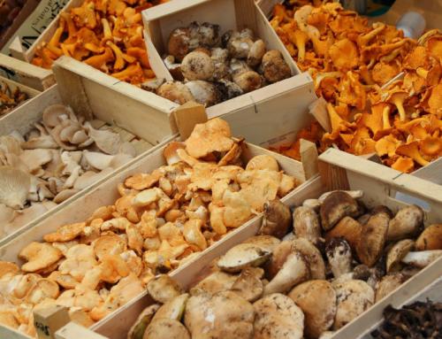 Готовим икру из грибов— рецепты на зиму